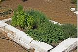 designing raised bed herb garden