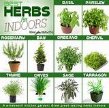 There is a list of herb garden ideas by using a container. Which one ...