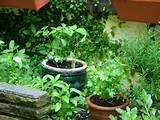 back yard 6 amazing herb garden designs small herb garden design