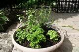 herb garden design ideas - herb garden [800x533] | FileSize: 103.90 KB ...