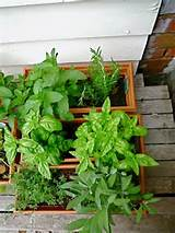 beautiful herb garden design ideas