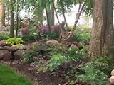 100_1710Landscaping, Gardens, Shade Garden, Hostas