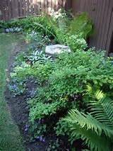 Perennials, shade perennials, gardening, shade gardening, garden