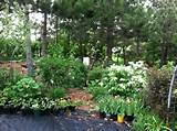 As a shade garden grows as the weather warms, each day is a new day of ...