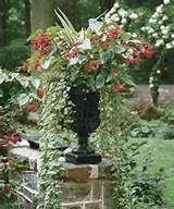 Other picture ofContainer Gardening Ideas Shade Fcdud