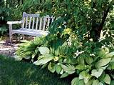Shade Gardens | 4 Steps to a Perfect Shade Garden Design