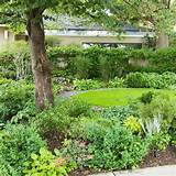 shade-loving groundcovers