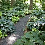 grow a lush shade garden with hostas