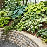 hostas plants on a slope above a retaining wall to hold soil