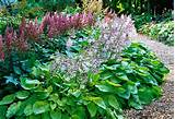 good combinations with hosta plants