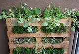 or plant in separate pots and group together for impact like this: