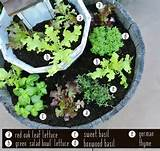And that's the beginning of my mini tiered lettuce and herb garden ...
