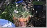 herb garden herb patio pots