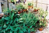 growing herbs in the urban core permaculture in the city