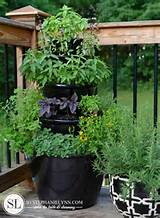 Our herb garden this year has finally taken root. While there are ...
