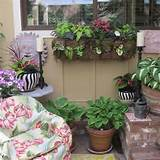 Northwest Gardening: Patio Pots Pack a Punch