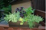 Five Creative Ways to Use Containers in Your Landscape