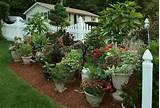 area and fill it with green foliage using container gardening