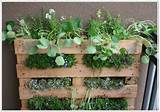 Cool vertical garden using an old wooden pallet – on Life on the ...