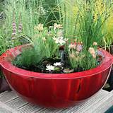 container water garden ideas