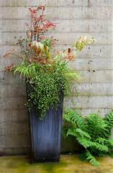 Potted Plant Ideas: 5 Top Tips for Your Patio's Planters