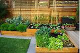 backyard landscaping ideas green lawn and raised bed garden design