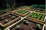 backyard vegetable garden designs and ideasbackyard vegetable garden