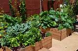 beautiful backyard vegetable gardenvegetable garden design ideas