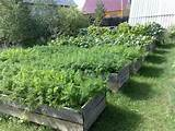 backyard garden design ideas with wooden boxes used for growing