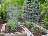 digital imagery above, is section of Backyard Vegetable Garden Ideas ...