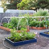vegetable garden design ideas backyard