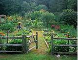 ... Garden archive. Backyard Backyard Vegetable Garden Home Design Ideas