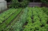 backyard vegetable garden design ideas 34 Backyard Vegetable Garden ...