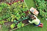 practice your hand at your own green thumb not only is tending garden