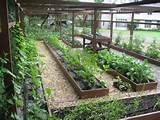 easy ideas garden vegetables easy ideas garden vegetables is inspiring ...