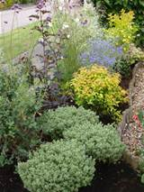 Low Maintenance Plants for the garden