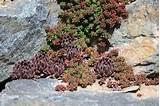 Succulent Rock Wall Garden