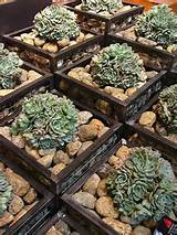 rock garden garden-ideas