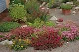 rock garden / succulent garden