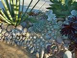 Rocks and Succulents Rock Garden