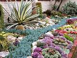 sherman gardens coral reef succulent bed