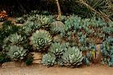 Succulent rock wall