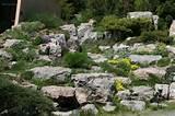 Rock Garden Ideas for Your Landscape