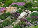 rock garden landscaping ideas - colorful hillside rock garden planting ...