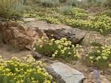 rock-garden-7