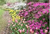 . Garden, Delectable Garden Design Artistry Licious Rock Garden Ideas ...