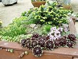 gardenless gardener