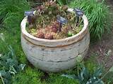 for a conventional rock garden why not plant one in a container