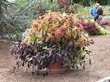 container gardens ideas container gardens potted coleus 1600x1200