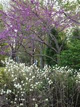 1,789 perennial flower garden Eclectic Home Design Photos